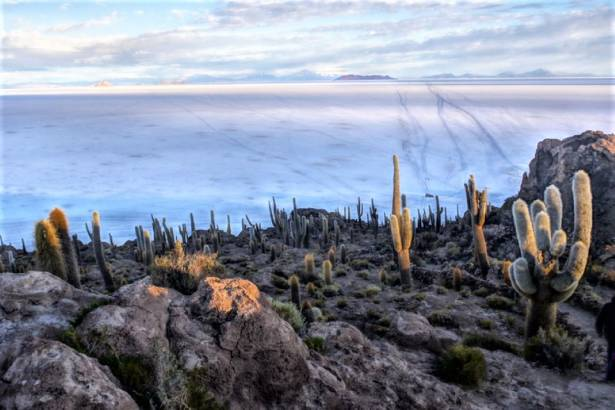 Isla Incahuasi and Salar de Uyuni